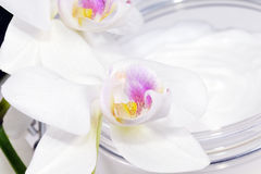Orchid with cosmetics, cream. Stock Photography