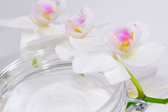 Orchid with crem Royalty Free Stock Photography