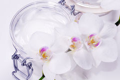 Orchid with crem Stock Photos