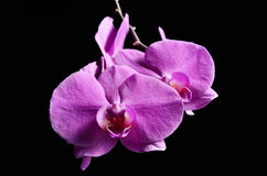 Orchidea. Orchid in the dark, Slovakia nature Royalty Free Stock Photos