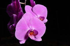 Orchid. In the dark, Slovakia nature Stock Photo