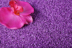 Orchid decorated with lilac sand Stock Images