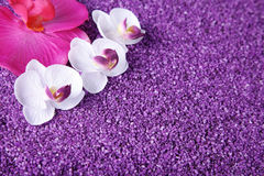 Orchid decorated with lilac sand Stock Photo