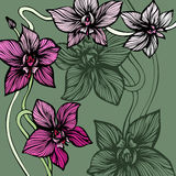 Orchid Decorative Background Stock Image