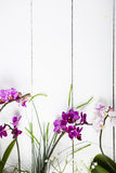Orchid and decorative leaves Stock Photo