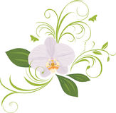 Orchid with decorative sprigs Royalty Free Stock Images