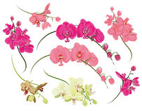 Orchid design vector elements Stock Photos