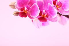 Orchid detail Royalty Free Stock Photo