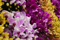 Orchid Display in Dalat royalty free stock image