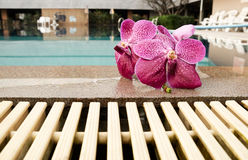 Orchid on edge of  pool Stock Photos