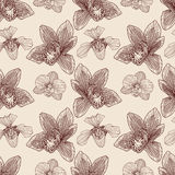 Orchid engraving seamless pattern Stock Images