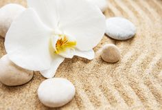 Orchid?es et pierres image libre de droits