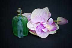 orchid för flaskexponeringsglas Royaltyfri Bild