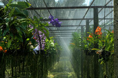 Orchid farm Royalty Free Stock Photos