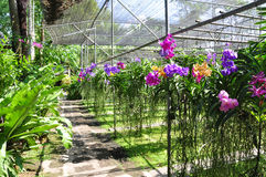 Orchid farm Stock Image