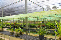 Orchid farm Royalty Free Stock Images