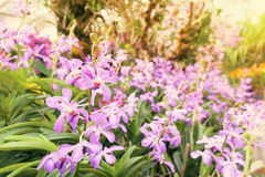 orchid farm Royalty Free Stock Photo