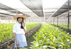 Orchid farm owner Stock Photography