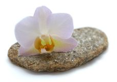 Orchid on flat stone Stock Image