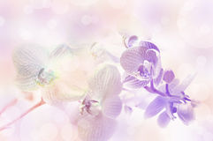 Orchid flowers. Stock Photos