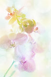 Orchid flowers background. Stock Photography