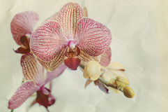 Orchid flovers. Royalty Free Stock Photos