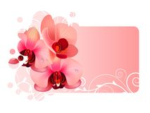 Orchid flower. Ornate frame with orchid pink flowers Stock Photo