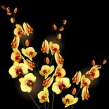 Orchid flower Stock Photo