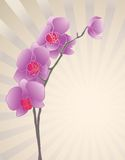 Orchid flower Royalty Free Stock Photos