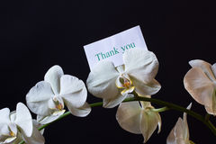 Free Orchid Flower Stock Photography - 28291432