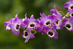 Free Orchid Flower Stock Photo - 4841980
