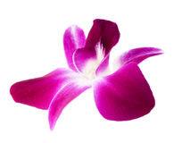 Orchid flower Stock Images