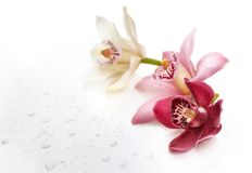 Orchid flower background Royalty Free Stock Images