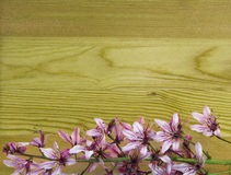 Orchid flower on background of wooden wall background with Royalty Free Stock Photos
