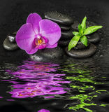 Orchid flower and bamboo reflected in a water Stock Photos
