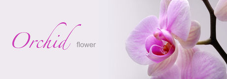 Orchid flower banner Royalty Free Stock Photography