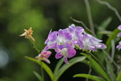 Orchid. Flower are so beautiful Royalty Free Stock Images