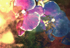 Orchid flower, beautiful art abstrack background Stock Images