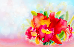 Orchid flower beauty in spring summer season. Royalty Free Stock Photo