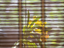 orchid flower behind window curtain Stock Image