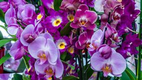 Orchid flower blossom Stock Photo