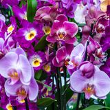 Orchid flower blossom Stock Images