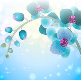 Orchid flower on blur background Royalty Free Stock Photo