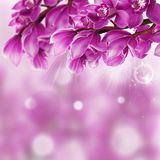 Orchid Flower border design close up Royalty Free Stock Image