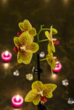 Orchid. Flower in candle light Stock Photos