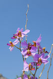 Orchid flower close up with blue sky background Stock Photos