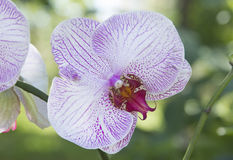 Orchid flower close-up Stock Photos