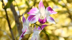 Orchid flower close-up scene with a soft focus footage stock video