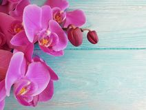Orchid flower colored wooden fragility frame decoration. Orchid flower colored wooden frame blossom decoration fragility Royalty Free Stock Photography