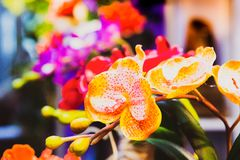 Orchid flower, colorful orchid stock photo